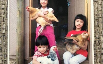 Chicken Companions