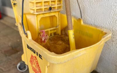 Mop Bucket Shenanigans: One Farmer's Tale of Her Crazy Chickens' Chosen Nest Box